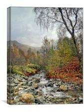 """Portrait of a Lakeland mountain stream"", Canvas Print"