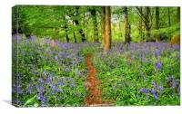 """""""Evening light in the bluebell wood 3"""", Canvas Print"""