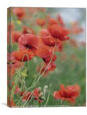 """Poppies in the mist"", Canvas Print"