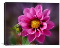"""Bright Pink Dahlia"", Canvas Print"
