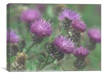 """""""Thistles in the mist"""", Canvas Print"""