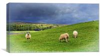 """""""Where Sheep may safely graze...Teesdale"""", Canvas Print"""