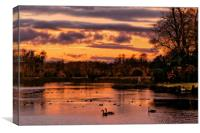 """""""Swans in the Sunset"""", Canvas Print"""