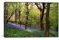 """Ancient bluebell wood"", Canvas Print"