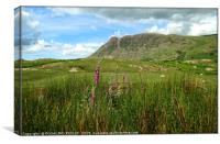 """Bronzing grasses and foxgloves  at Wasdale"", Canvas Print"