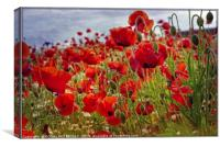 """Poppies in the breeze"", Canvas Print"