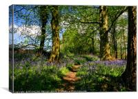 """Afternoon sunshine in the bluebell wood"", Canvas Print"