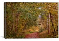 """A walk in the Autumn woods"", Canvas Print"