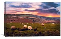 """Grazing Sheep"", Canvas Print"