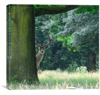 Curious red stag deer, Canvas Print