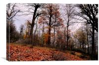 The beauties of Autumn in OLANG jungle 9,, Canvas Print