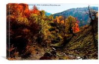 A nice view of Autumn in jungle,, Canvas Print