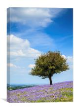 Lone Tree in Bluebells, Canvas Print