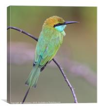Green Bee Eater, Canvas Print