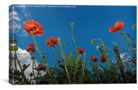 Poppies, Canvas Print