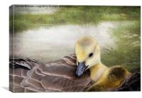 There's nothing like a mama-hug. ~Terri Guillemets, Canvas Print