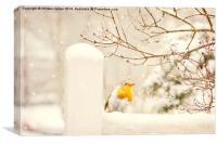 The little red robin on a snowy winters day in lo, Canvas Print