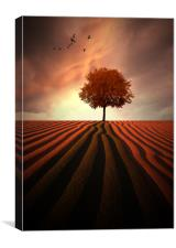 The Little Autumn tree, Canvas Print