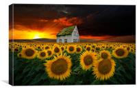 the  sunflower field , Canvas Print