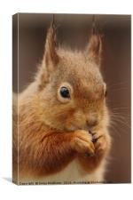 Red Squirrel II, Canvas Print