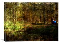 Bench in woodland, Canvas Print