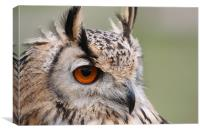 European Eagle Owl, Canvas Print