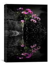 Flower and Rocks, Canvas Print