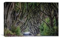 The Dark Hedges Ballymoney County Antrim, Canvas Print