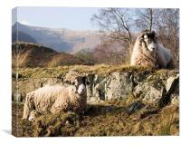 Sheep in the lakes, Canvas Print
