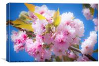 Cherry Blossom, Canvas Print