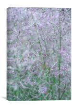 Purple and green summer grasses, Canvas Print