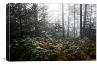 Early autumn morning in the forest, Canvas Print