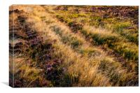 Summer light on a moorland hillside, Canvas Print