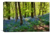 Bluebells at Etherow country park, Stockport, Canvas Print