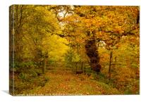 A walk in the autumnal woods, Canvas Print