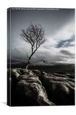 The Old Tree, Canvas Print