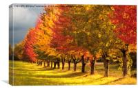 All the Autumn colors, Canvas Print