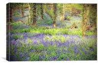 Painted Bluebell Wooded Carpet, Canvas Print