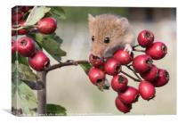 Harvest Mouse on Berries, Canvas Print