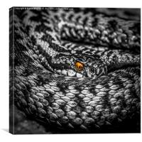 The Adders Jewel, Canvas Print