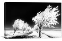 Cherry Tree Grove, Wolds Way, Canvas Print
