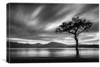 Lone Tree, Milarrochy Bay, Canvas Print