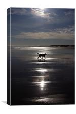 Dog on Beach, Canvas Print