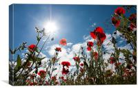 Poppy field at Warkworth, Canvas Print