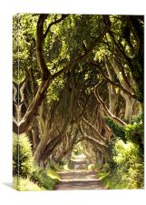 The Dark Hedges, Canvas Print