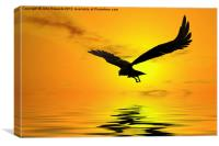 Eagle Sunset, Canvas Print