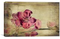 Cherry Blossom with Textures, Canvas Print