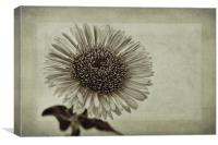 Aster with Textures, Canvas Print
