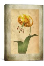 Lily painting with textures, Canvas Print