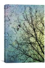 One for Sorrow, Canvas Print